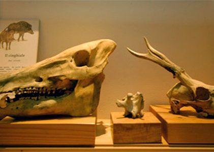 Museo della storia naturale